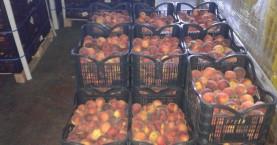 Μοίρασαν 23 τόνους ροδάκινα απο τον Δήμο Πλατανιά