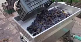 Μεγάλες προσφορές σε σπαστήρες σταφυλιών από την Agrocenter Ραμπαλάκος