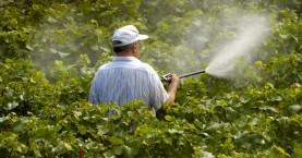 Πιστοποιητικό για ορθολογική χορήγηση χρήσης φυτοφαρμάκων