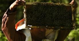 Τρία στα 4 μέλια περιέχουν παρασιτοκτόνα, αν και σε «ασφαλείς ποσότητες