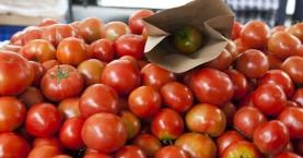 Πρωτοφανής απάτη με… ντομάτες στην Κίσαμο!