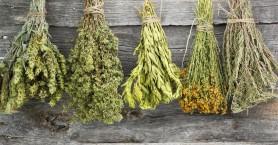 Σεμινάριο για την παραγωγή & εμπορία φαρμακευτικών-αρωματικών φυτών Κρήτης