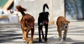 Έγινε στη Σητεία στείρωση 101 αδέσποτων απο εθελοντές κτηνιάτρους