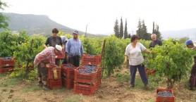 Λήγει η προθεσμία ένταξης αγροτών στο κανονικό καθεστώς ΦΠΑ
