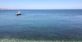 Δελφίνι βγήκε στα ρηχά σε παραλία του Ηρακλείου (φωτο)