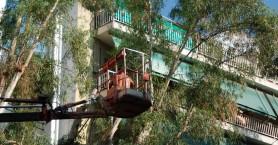 Προσοχή! Κλαδέματα δέντρων στην περιοχή της Αγίας Μαγδαληνής