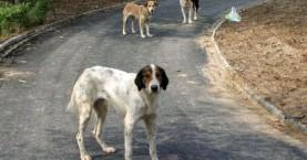 Είχε τα σκυλιά σε στάβλο - Πρεμιέρα στα πρόστιμα της ΕΛ.ΑΣ. για την ευζωία