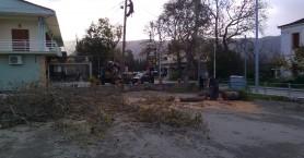 Έπεσε δέντρο στη λεωφόρο Σούδας και κόπηκε το ρεύμα