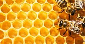 Χανιά: Να αγοράζουν άφοβα κρητικό μέλι οι καταναλωτές