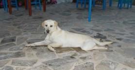 Έλλη: Σε αυτό το όνομα ακούει σκυλίτσα που χάθηκε στα Χανιά (φωτο)