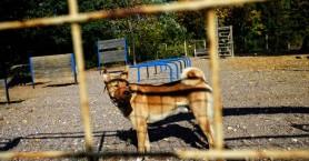 Φονιάς σκύλων δολοφονείται από ιδιοκτήτη σκύλου, αφού του σκότωσε το ζωάκι