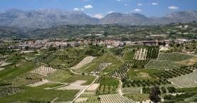 Οι αμπελοκαλλιέργειες στην Ελλάδα
