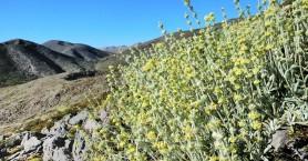 Χανιά:Τα αρωματικά φυτά πρέπει να προστατευτούν από πιθανή γενετική ρύπανση