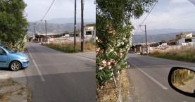 Ορατότητα μηδέν από κλαδιά στην οδό Σάκη Καράγιωργα