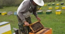 Έκτακτη γενική συνέλευση πραγματοποιούν οι μελισσοκόμοι