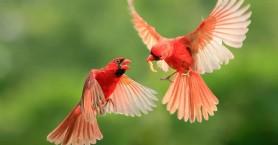 Εξωτικά πουλιά υπό εξαφάνιση βρήκαν ένα νέο ασφαλές σπίτι