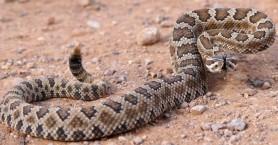 Η προσπάθεια να διώξει το φίδι από το σπίτι τού κόστισε 15.000 ευρώ