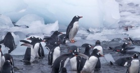 Greenpeace: Η ρύπανση έχει φτάσει παντού - Πλαστικά ακόμη και στην Ανταρκτι