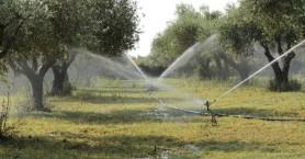 Χωρίς νερό οι καλλιέργειες στο Σκινέ - Αγανακτισμένοι οι παραγωγοί