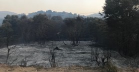 Τι ισχύει για την κοπή των καμένων δέντρων στον Αποκόρωνα