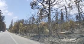 Αποζημιώσεις δήμου Αποκορώνου στους πληγέντες από τη φωτιά