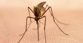 Πώς θα προστατευθούμε από τον ιό του Δυτικού Νείλου