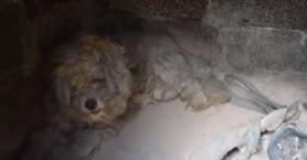 Συγκίνηση στο Μάτι: Βρήκαν σκύλο ζωντανό μέσα σε φούρνο καμένου σπιτιού