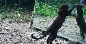 Άγρια ζώα κοιτάζονται για πρώτη φορά στον καθρέφτη!