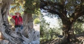 Αφιέρωση αμπελιτσιάς 700 + χρόνων στην μνήμη του καθηγητή Όλιβερ Ράκχαμ