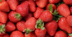 Φράουλες με βελόνες προκαλούν τρόμο