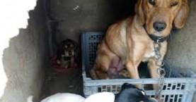 Κρήτη:Έκλεισαν σε φούρνο σκυλίτσα με τα 9 κουτάβια της και έβαλαν φωτιά
