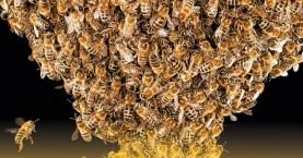 Χανιά:Σεμινάριο για την πρόληψη και αντιμετώπιση των ασθενειών της μέλισσας