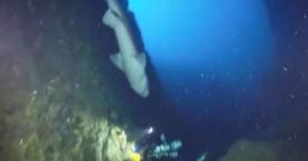 Εντυπωσιάστηκαν τόσο με τα πολύχρωμα ψάρια που δεν είδαν τον καρχαρία