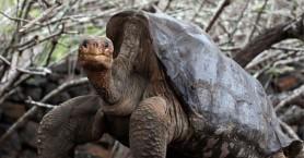 Έκλεψαν 123 γιγαντιαίες χελώνες από τα νησιά Γκαλαπάγκος
