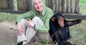 Dr Jane Goodall: Ένας σπουδαίος άνθρωπος στο Ηράκλειο