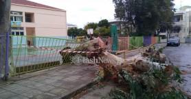 Χανιά: Τεράστιο δέντρο διέλυσε την είσοδο σχολείου και έπεσε σε αυτοκίνητο