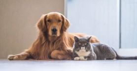 Έρχεται νέος νόμος για τα ζώα συντροφιάς με σημαντικές αλλαγές