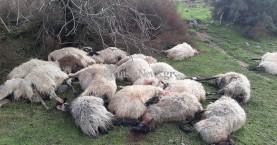 Απίστευτο! Σκοτώθηκε κοπάδι προβάτων στα Χανιά από κεραυνό! (φωτο)