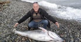Η θάλασσα ξέβρασε ένα τεράστιο ψάρι στον Ταυρωνίτη (φωτο)