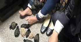Δεν πίστευαν στα μάτια τους - Γυναίκα είχε κρύψει 24 χάμστερ στα πόδια της!