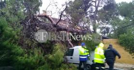 Δέντρο έπεσε πάνω σε αμάξια στο Κήπο - Κόπηκαν καλώδια της ΔΕΗ (φωτο)