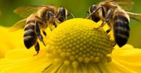 Τα πάντα για τη μελισσοκομία σε ημερίδα του Μελισσοκομικού Συλλόγου Χανίων