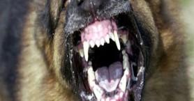 Στο νοσοκομείο 5χρονο από επίθεση σκύλου - Τη δάγκωσε στο πρόσωπο