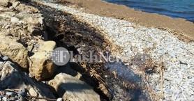 «Ντουμάνιασε» και ο Δραπανιάς από την φωτιά σε καλάμια (φωτο)