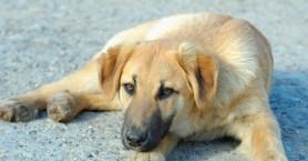 Δήμος Νάουσας: Μήνυση κατά αγνώστων για τη θανάτωση αδέσποτων
