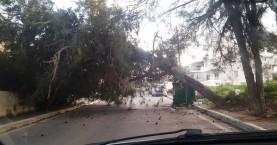 Από τύχη δεν συνέβη ατύχημα σε πτώση δέντρου στα Χανιά (φωτο)