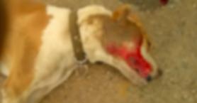 Βρήκε το σκύλο του νεκρό και ψάχνει στοιχεία (φωτο)