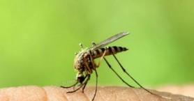Προειδοποίηση για τα κουνούπια και τον ιό του Δυτικού Νείλου