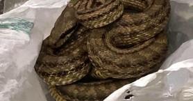 Μεγάλο φίδι αναστάτωσε το κέντρο της Θεσσαλονίκης