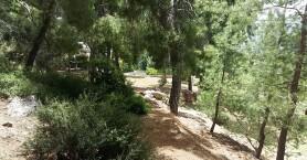 Στα 2.200 τα διαφορετικά είδη φυτών της Κρήτης -Αναγκαία η Βιοκλιματική Μεσογειακή Τράπεζα
